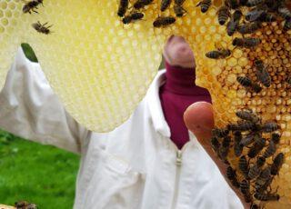 Wildbienenhotels